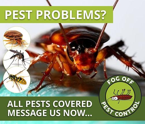 Pest Advert.jpeg