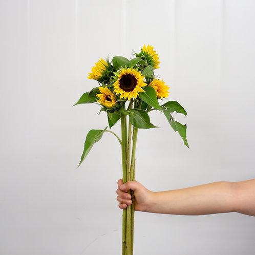 Sunflower - Mini Yellow