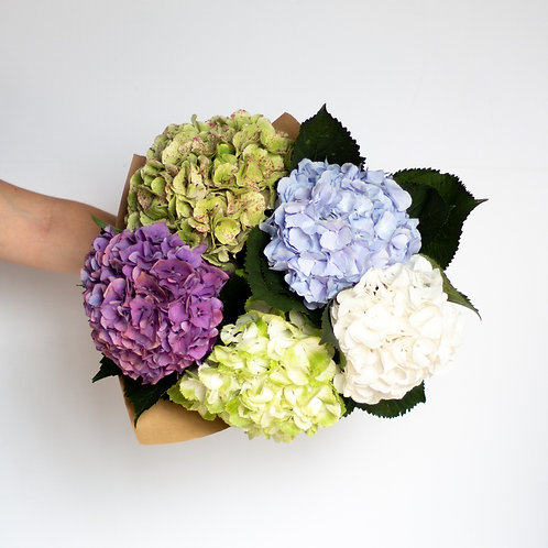 Hydrangea - Special Assorted Bundle
