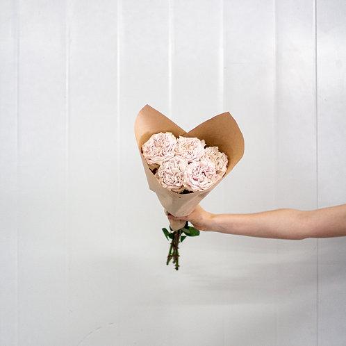 Garden Rose - Westminister Abby