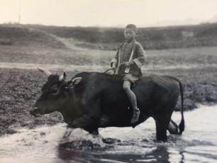 The Ox and the Irish