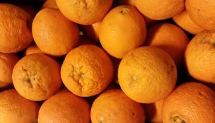 Orangen web.jpg