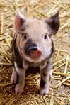 Tierschutzvolksbegehren