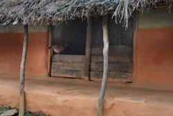 Chicken in house small_terrymadsen