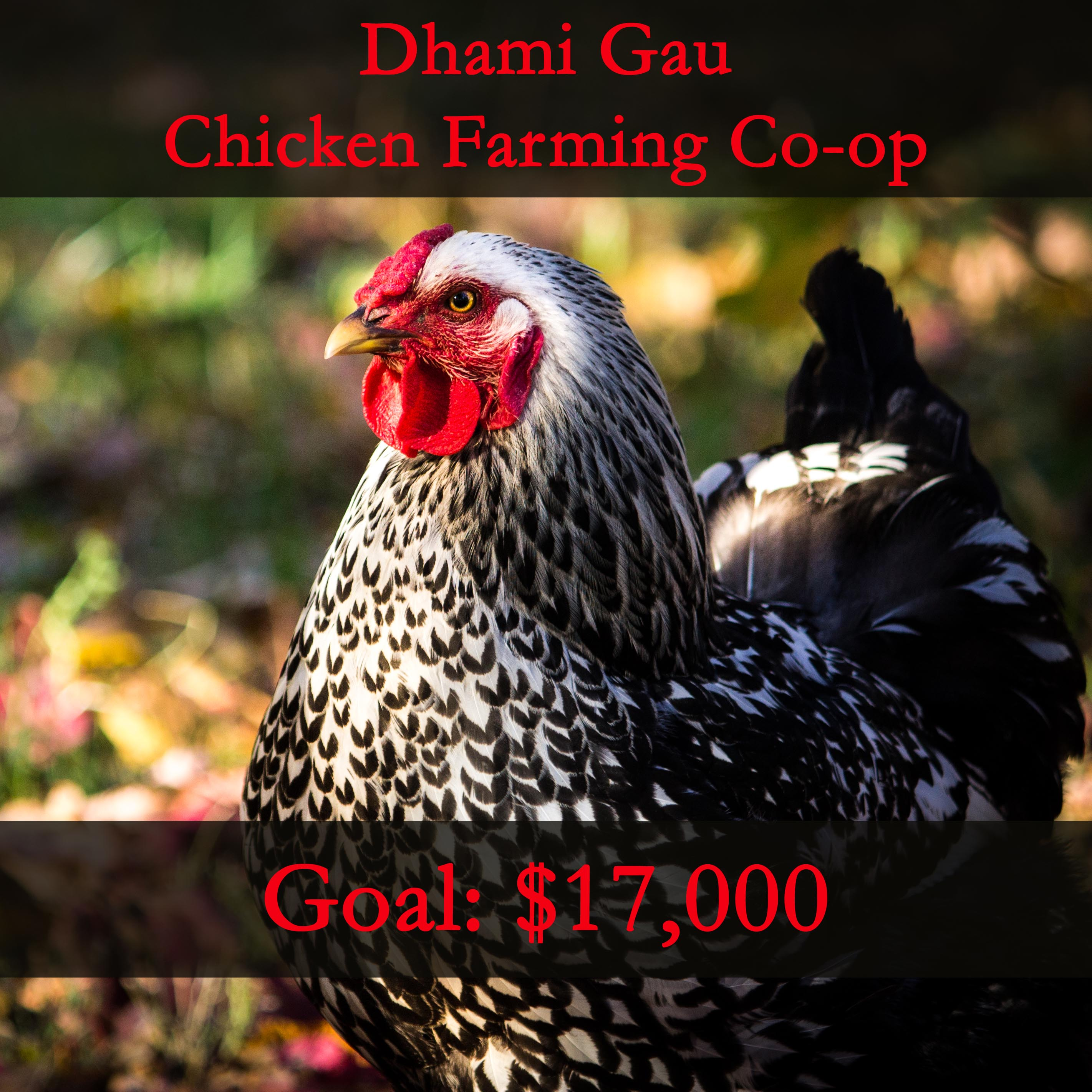 Help Build a Chicken Farm