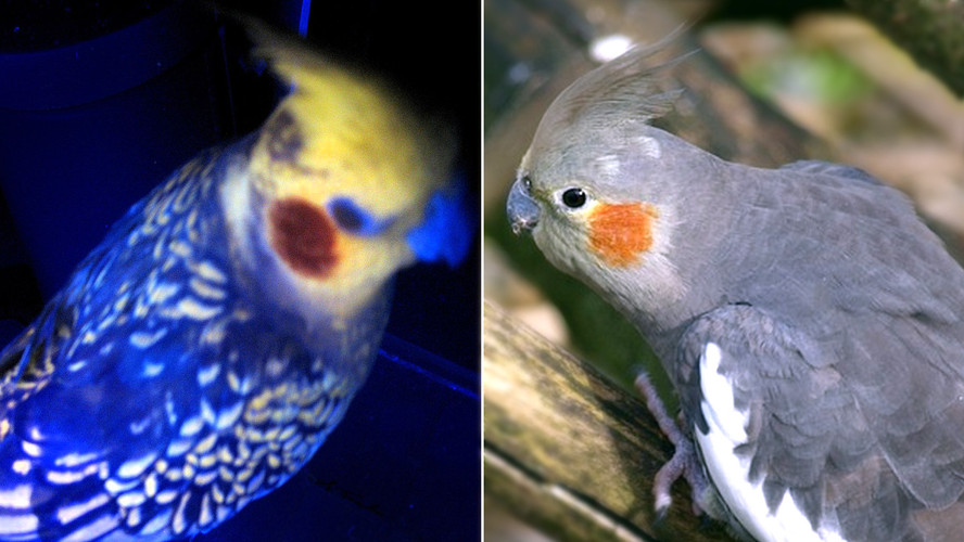 The Amazing World Of UV Vision, Seen Through The Eyes Of…. Birds