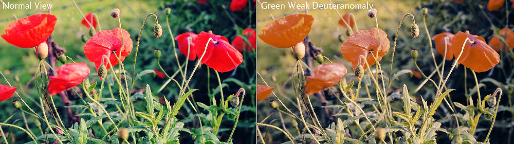 red and green colour blind comparison