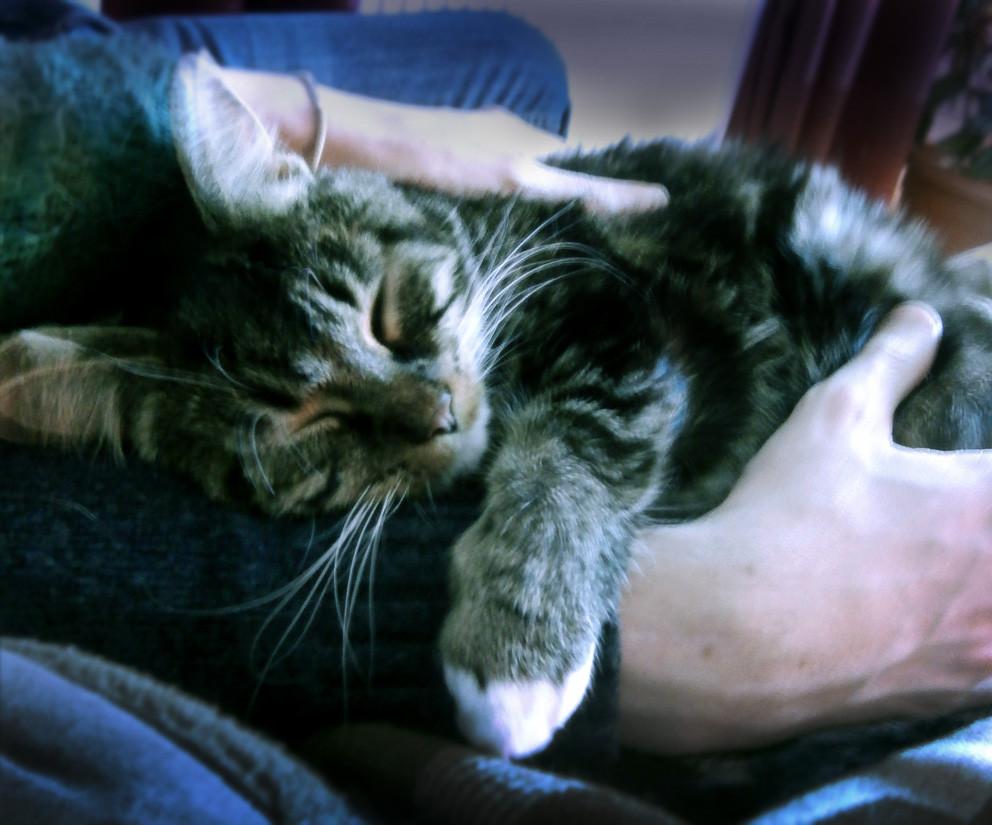 Cuteness overload during cat cuddles
