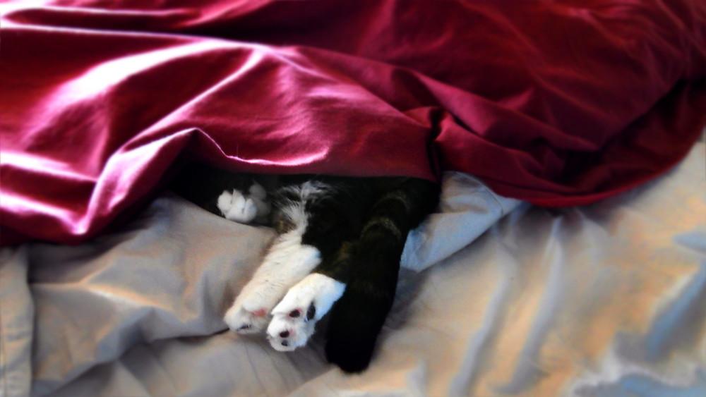 Cute sleeping cat image