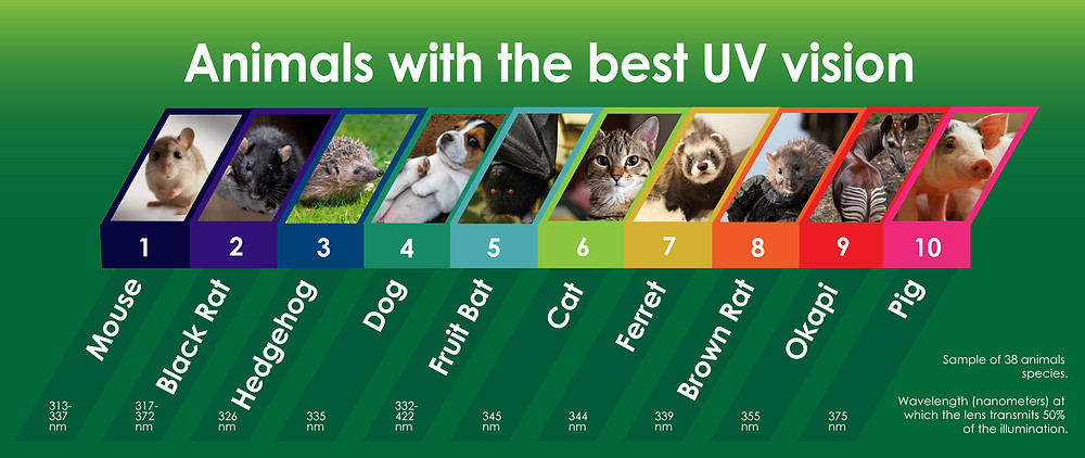 Animal UV vision infographic