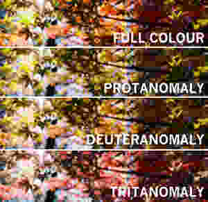 colour blindness example images