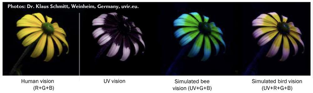 Simulated creature vision V human vision image