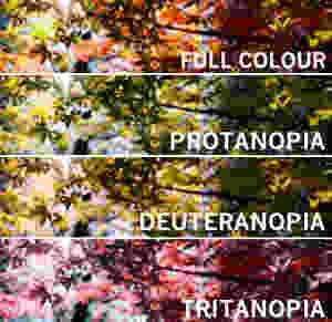 colour blindness simulation images