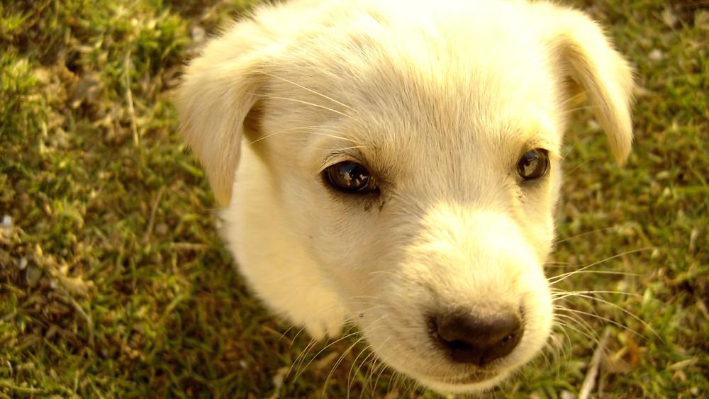 Cute puppy image