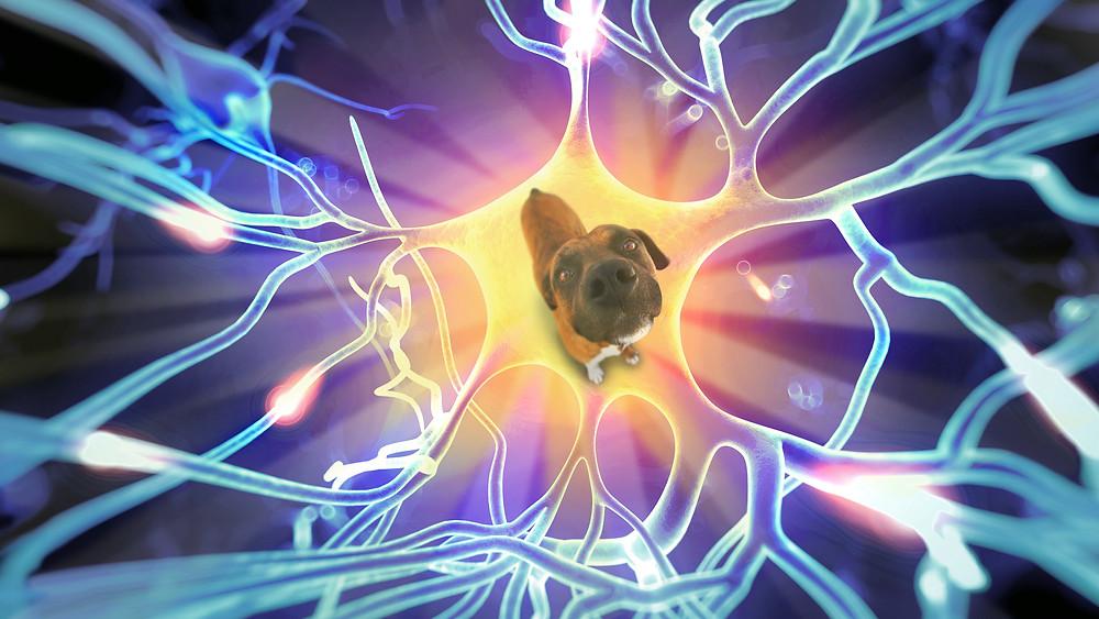 Cute animals improve mental health