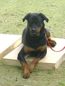 dog training 1809 113.JPG