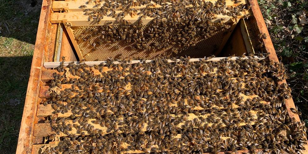 Physiologische Zusammenhänge im Bienenvolk