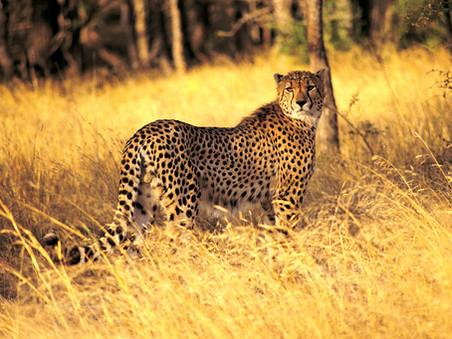 O QUE É SUSTENTABILIDADE ANIMAL?
