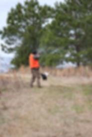 quail22019.JPG