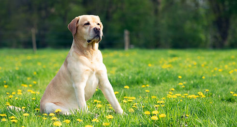 Dog Portrait _edited.jpg