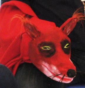 Fuchs Selbstbau