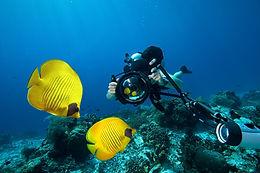 FISH-HEADING IN HAWAII