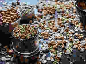 Linsen, Bohnen, Getreide