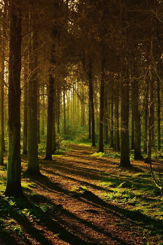 Wald Baumstämme Moos