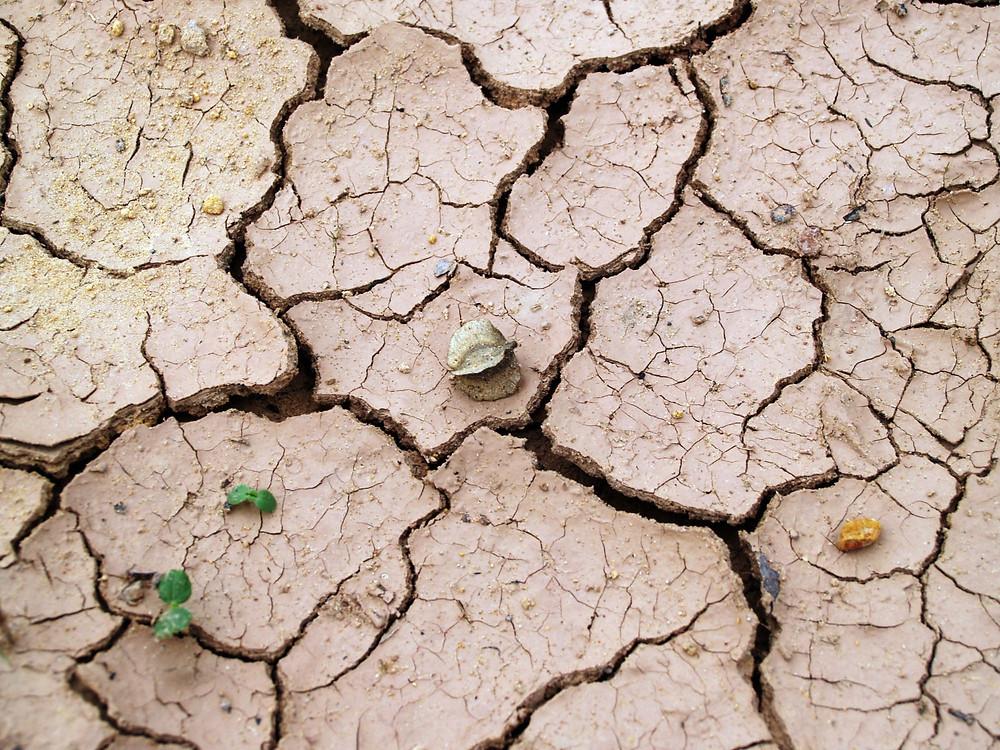 Erde Boden