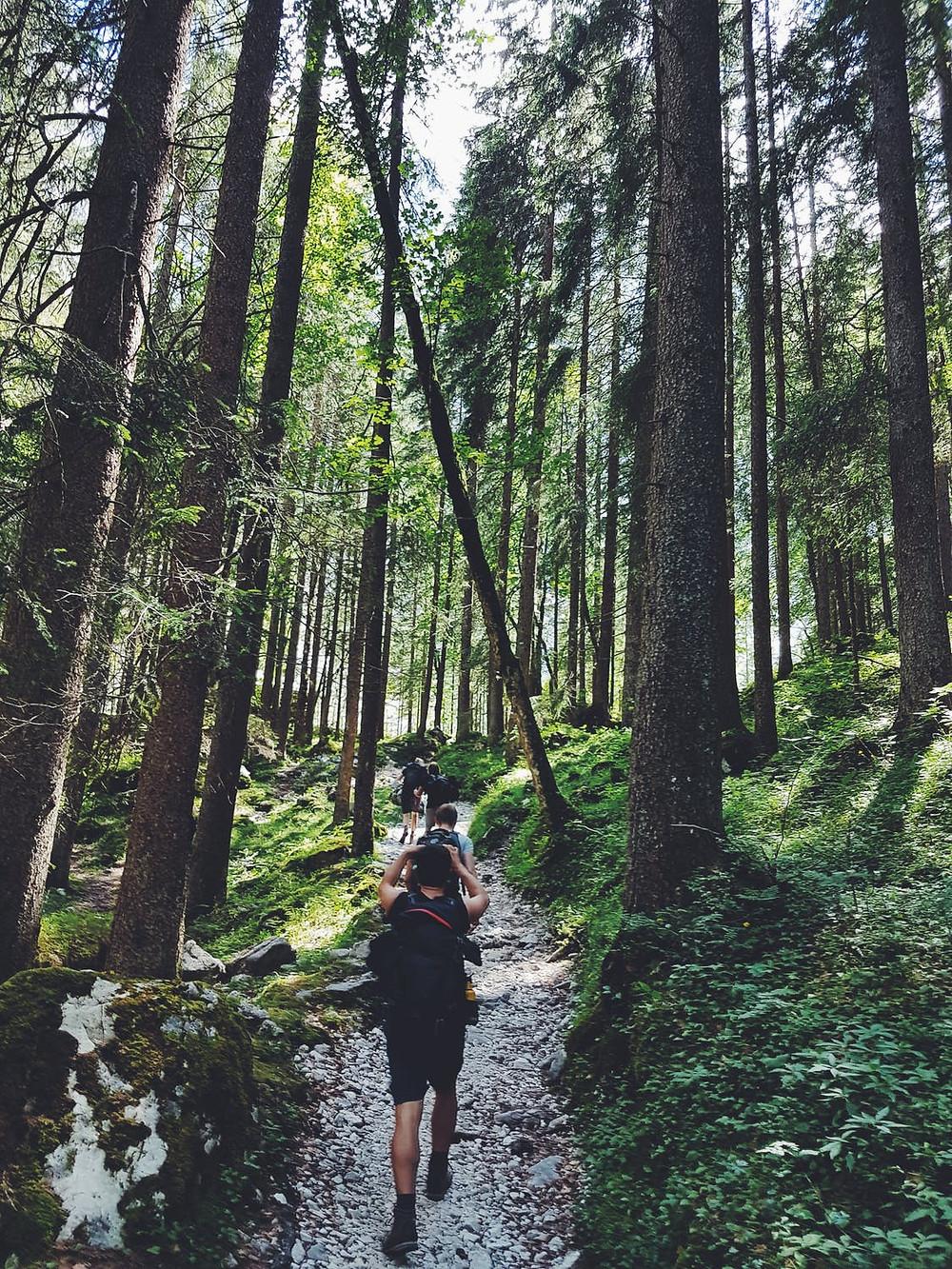 wood trail