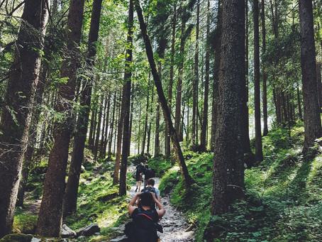 Natursport: von Nadelbäumen und Killerzellen