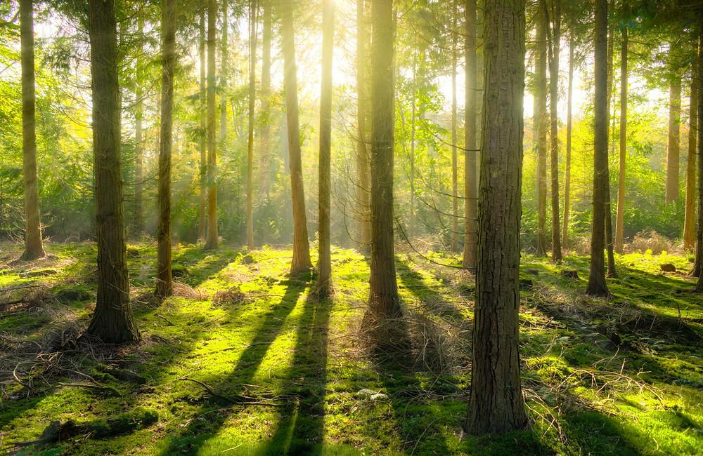 Wald Sonne Moos