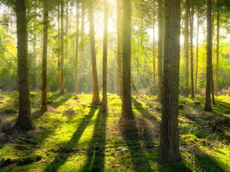 Zurück zur Natur – Von Naturdistanz, Spielräumen und Waldbaden
