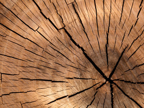 Roll mit Holz - Faszientraining mit Naturmaterialien