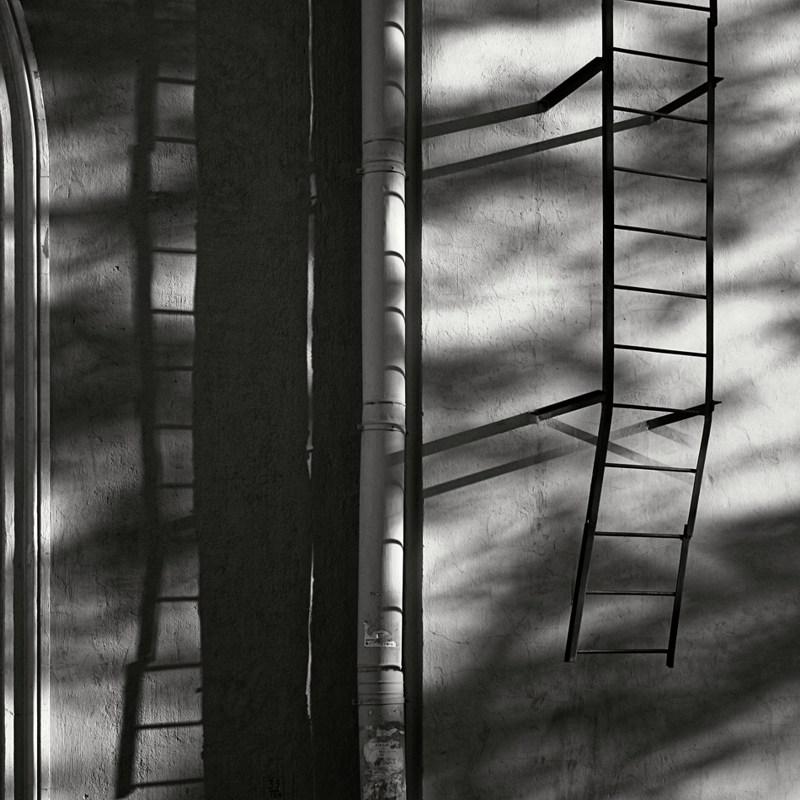 Ladder. Springtime