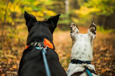 Tuck-Lilah-Dogs-View-Fall.jpg