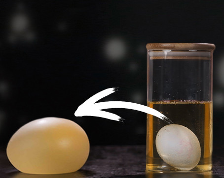 Disappearing Eggshell Experiment for Kids