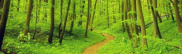 Green Forest with Path - Henry Park Law, law office new york, henry park, intellectual property, legal services