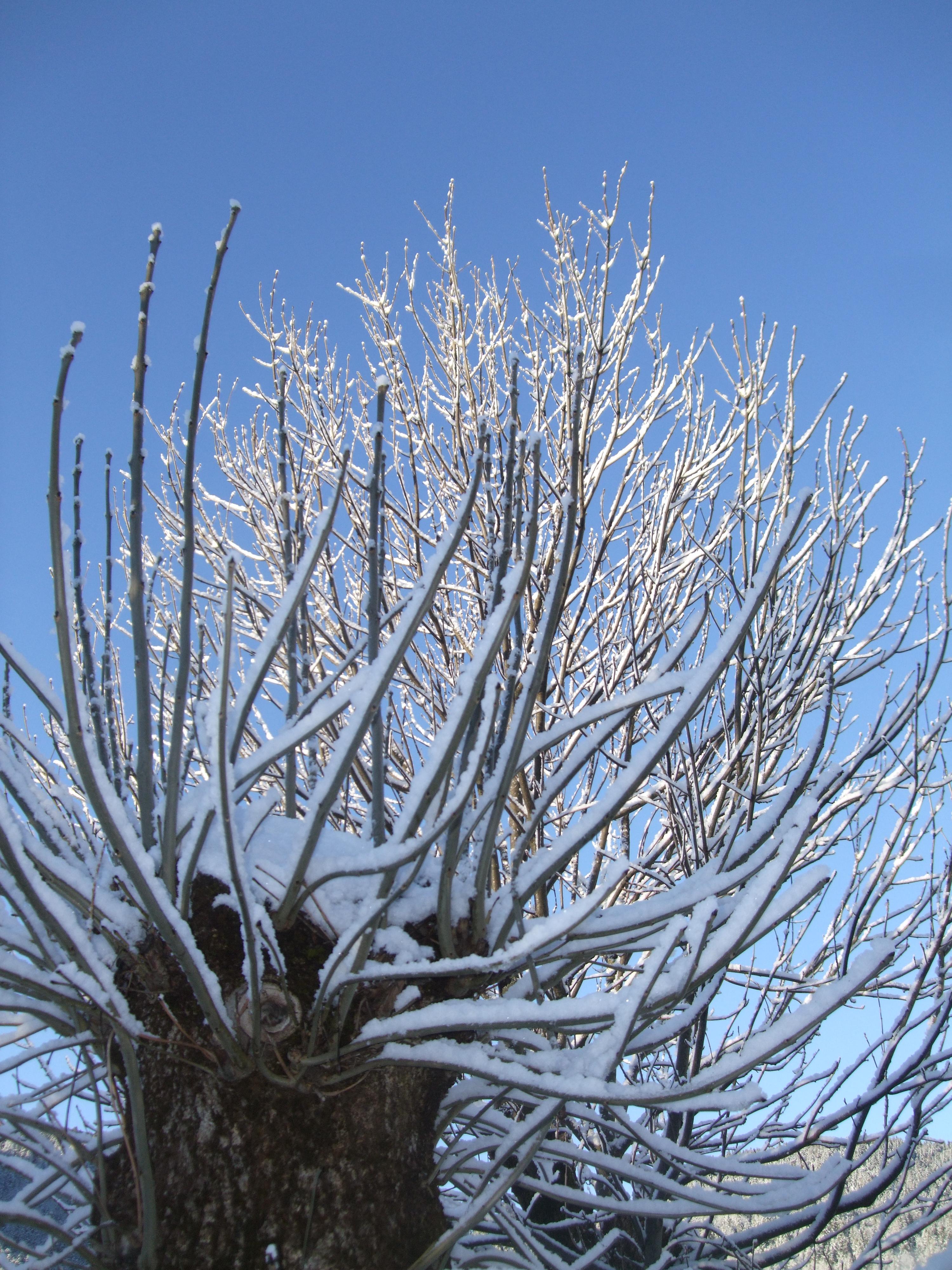 un matin d hiver.JPG