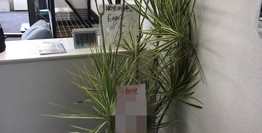 商品名 お祝い用観葉植物