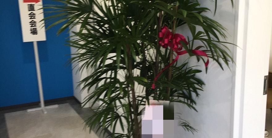 商品名 お祝い用観葉植物ー25