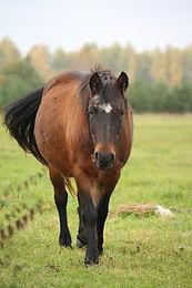 older horse.jpg
