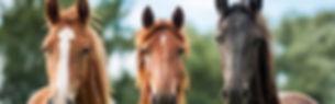 3-horses-wallpaper-768x480.jpg