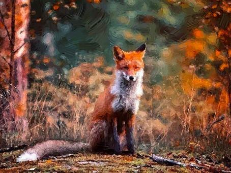 Осень - лисье время...