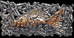 Панно Fish