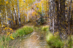 Irrigation Ditch in Fall