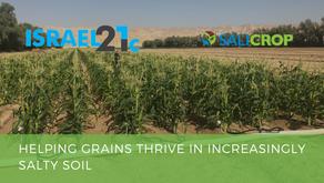 Salicrop featured on Israel 21c-Helping grains thrive in increasingly salty soil
