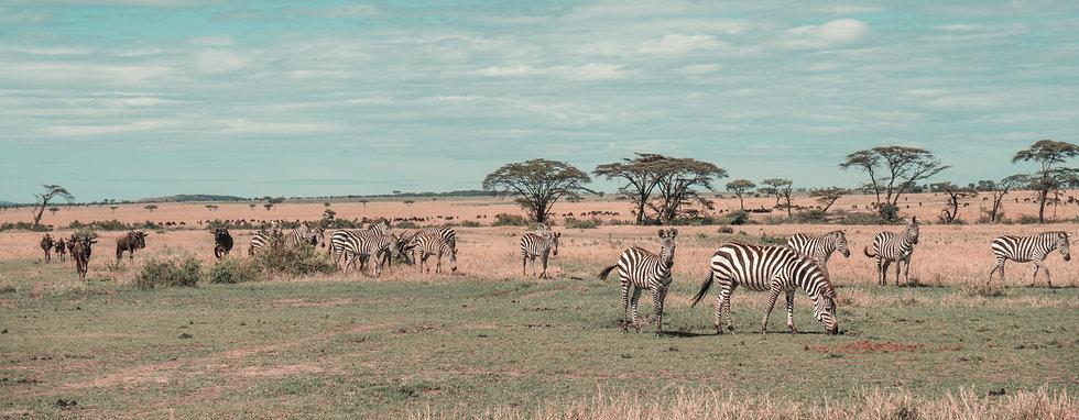 Africa Titel.jpg
