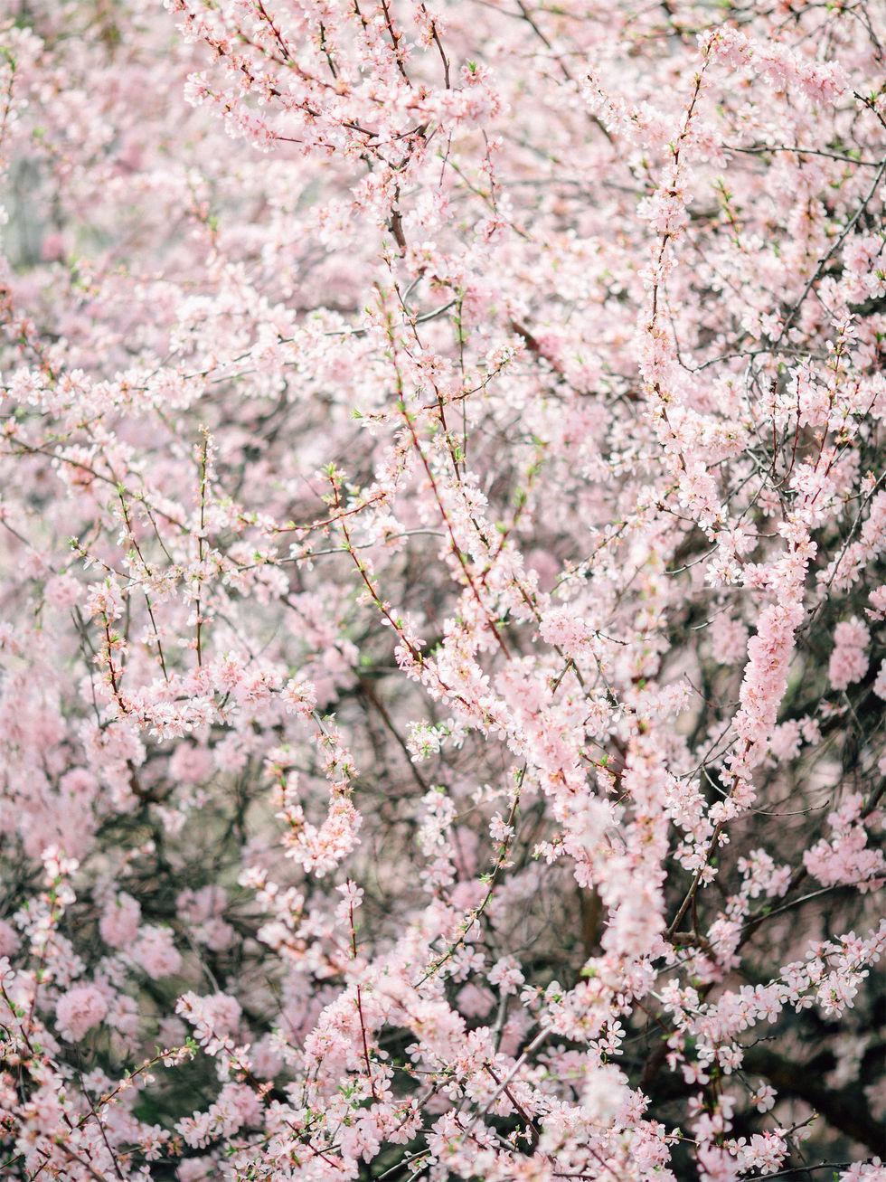 2019.05.04 Ника Голд Сакура-14.jpg