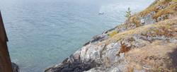 Orcas off Ekins Point